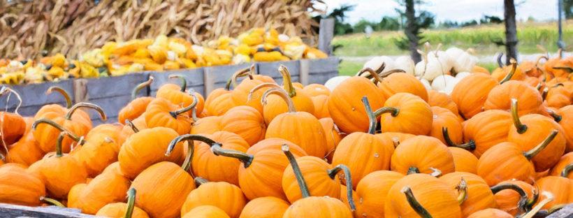 pumpkin-patch-new-england