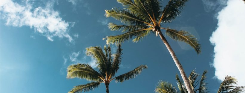 low-angle-photography-of-palm-trees-1168764 (1)