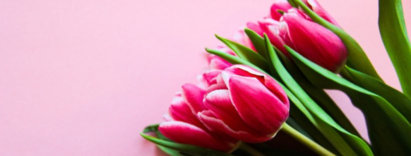 pink-tulips-on-pink-surface-3906071